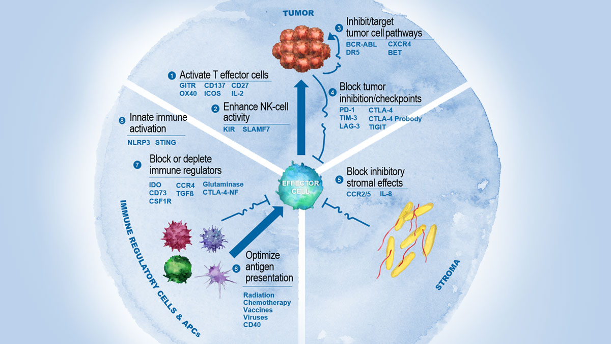 A Virtuous Cycle: What The Immuno-Oncology Revolution Means For